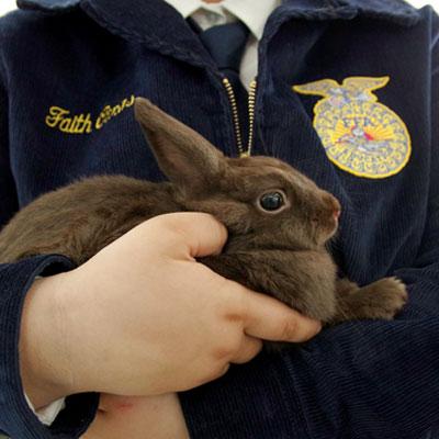 Youth Rabbit Show